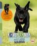 Rambazamba mit Labbi Mamba  - Die aufregende Zeit vom Welpen zum Junghund